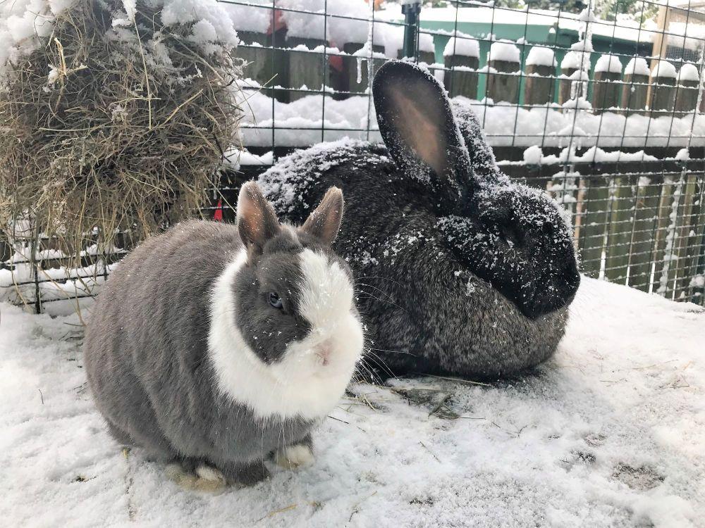 orville thumbelina snow (5)