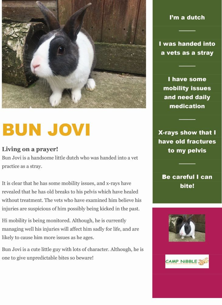 Bun Jovi info sheet