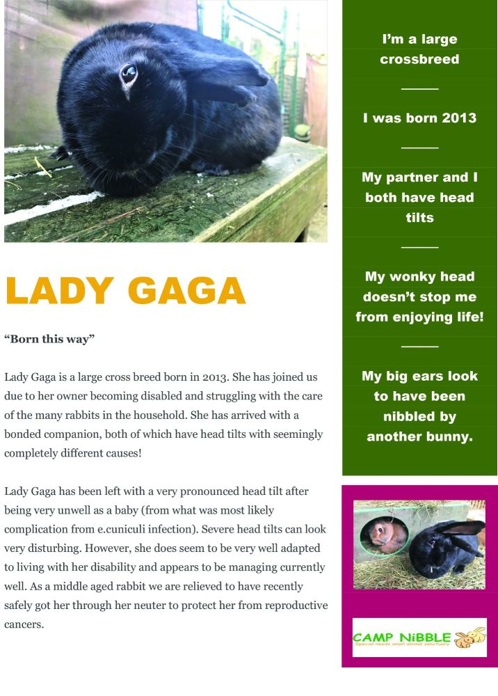 Lady Gaga - info sheet jpg