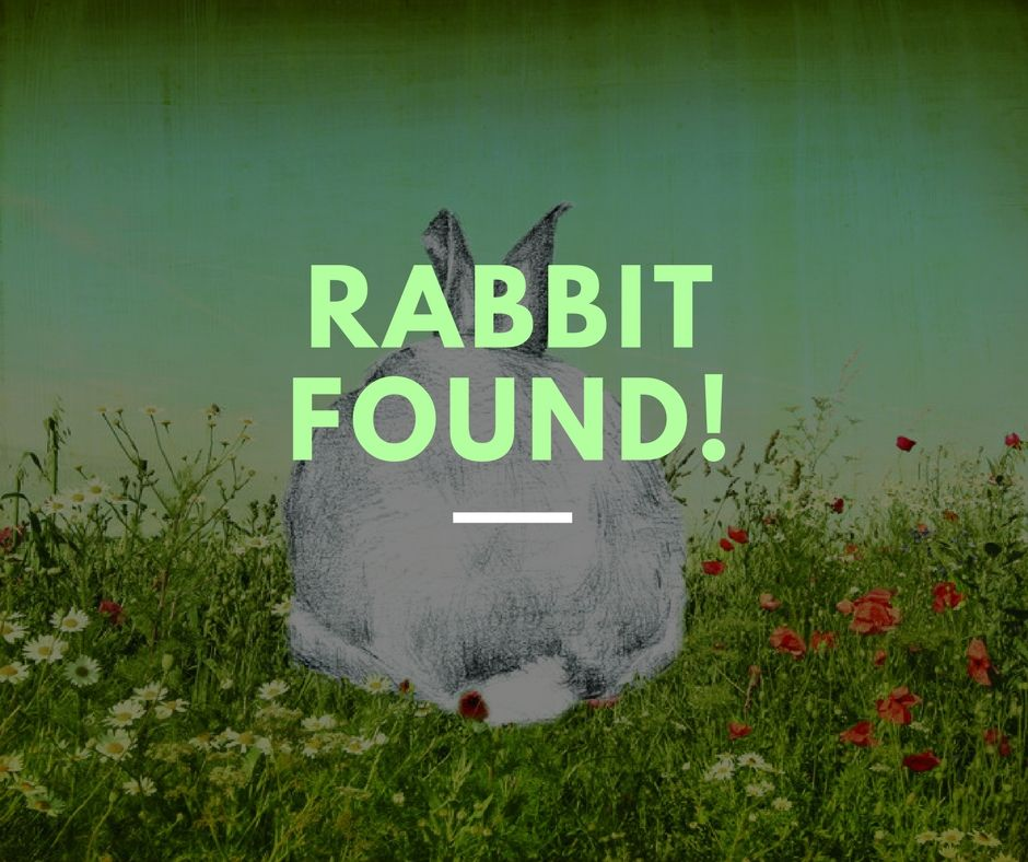 Rabbit found