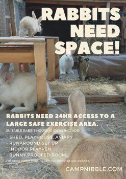 Rabbits need space poster small