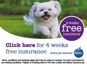 Pet plan - 4 weeks free