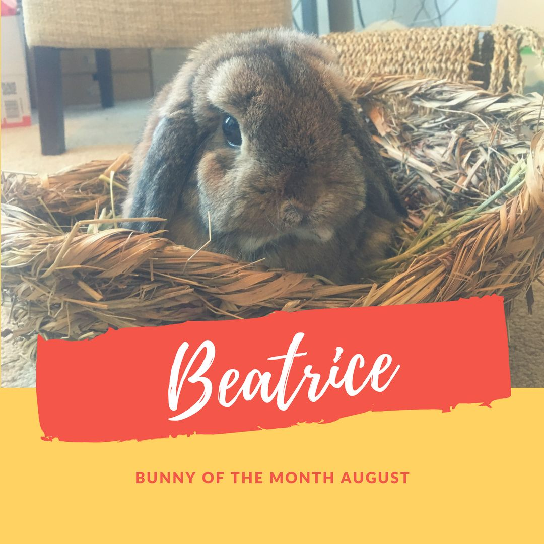 Beatrice bunny of the month