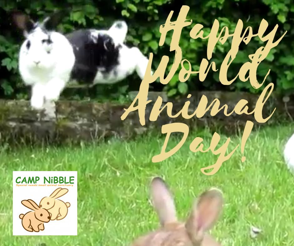 Happy World Animal Day! 2