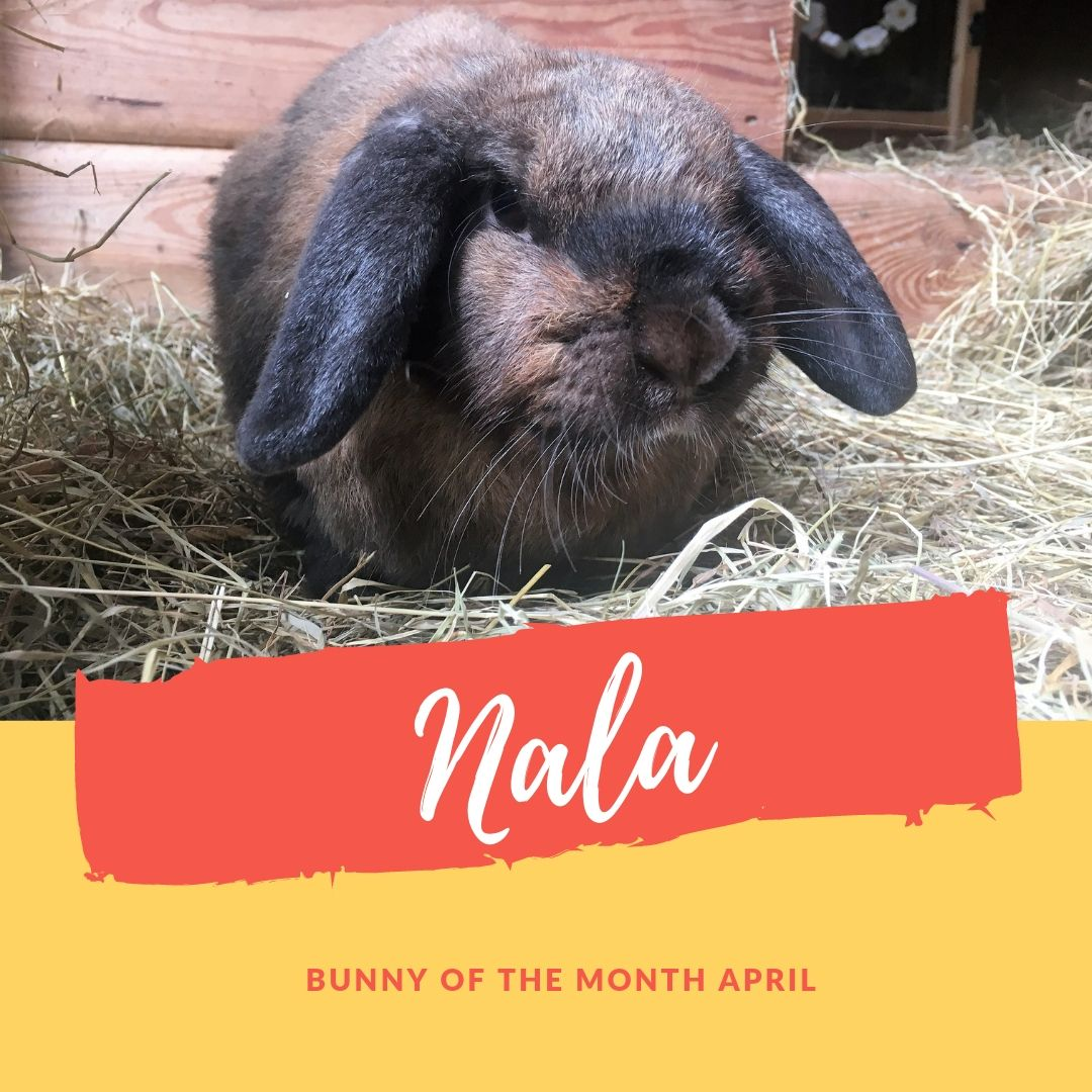 Sanctuary bunny of the month April Nala