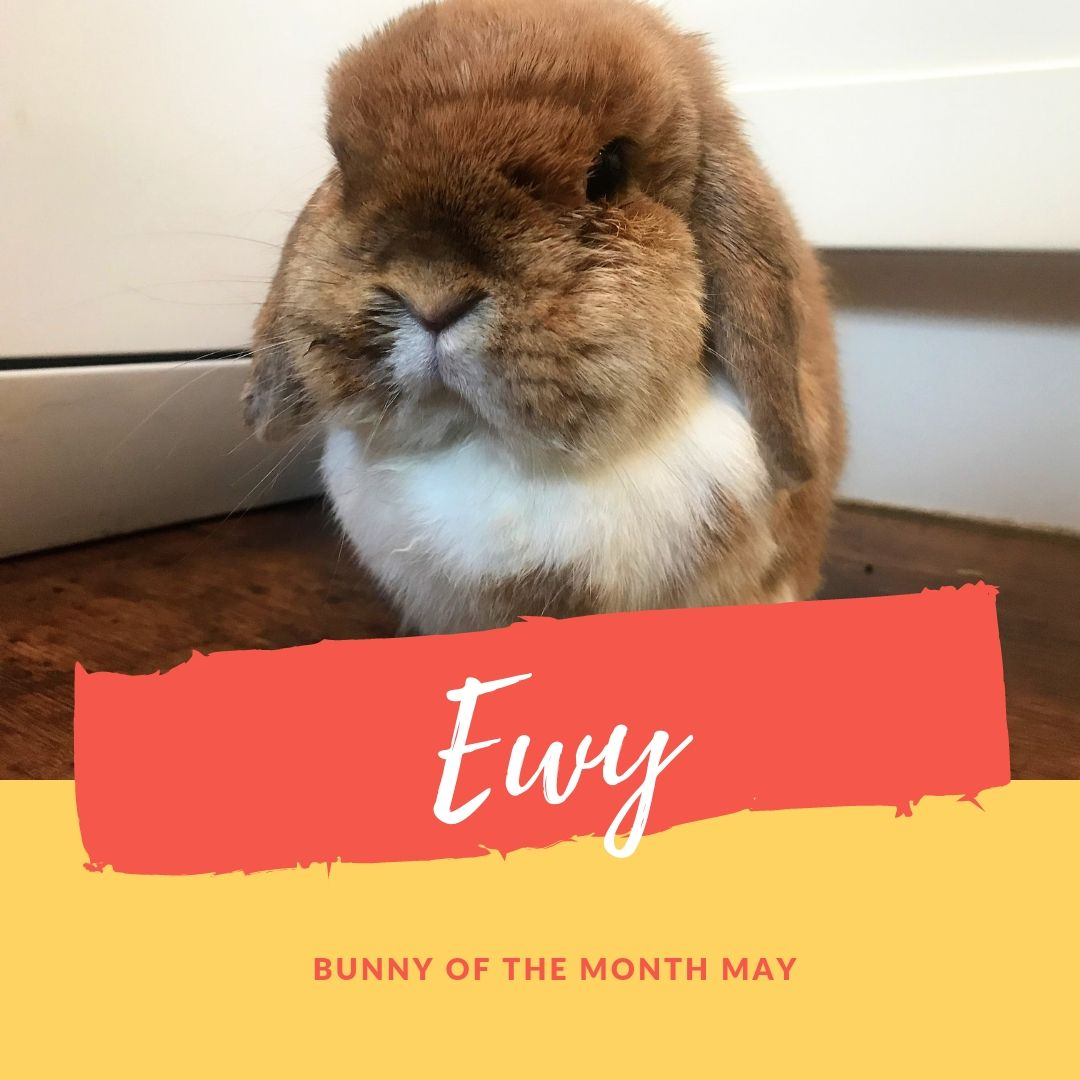 Ewy bunny of the month