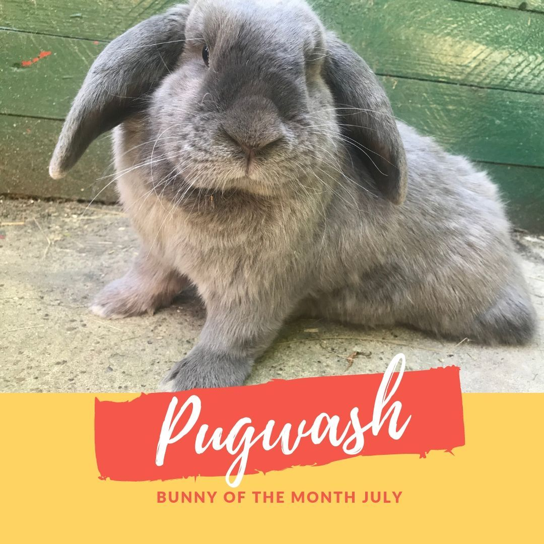 Pugwash Bunny of the month