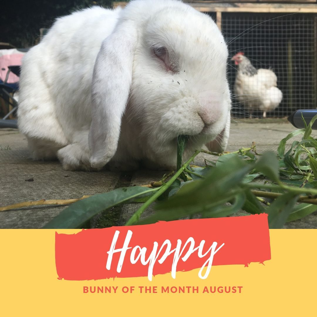 Happy sanctuary bunny of the month August