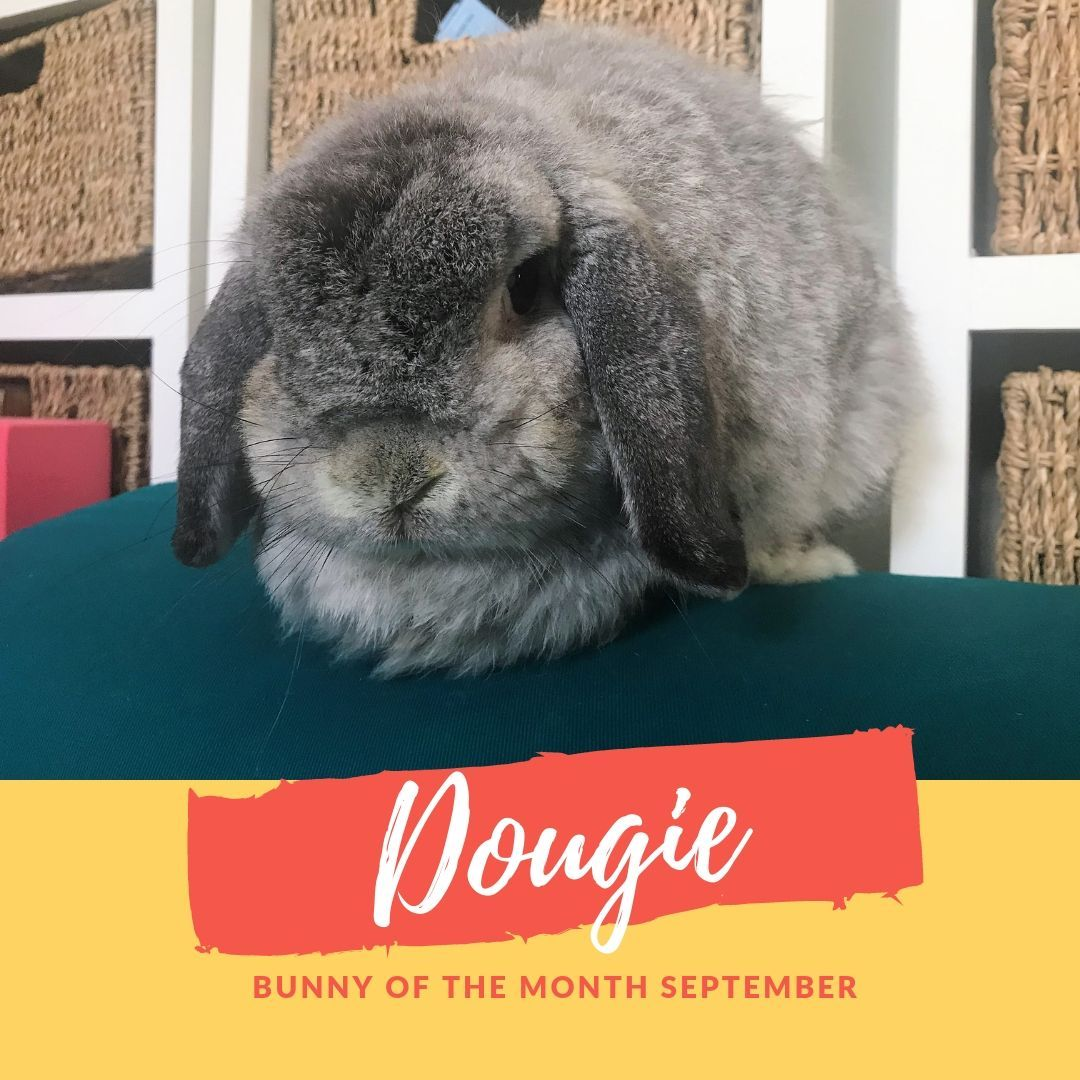 Dougie bunny of the month