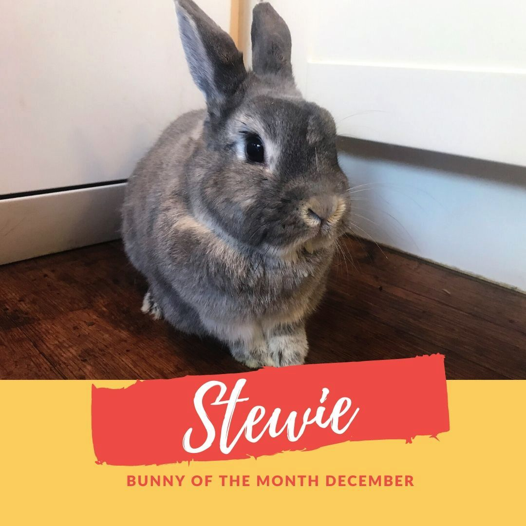 sanctuary bunny of the month stewie