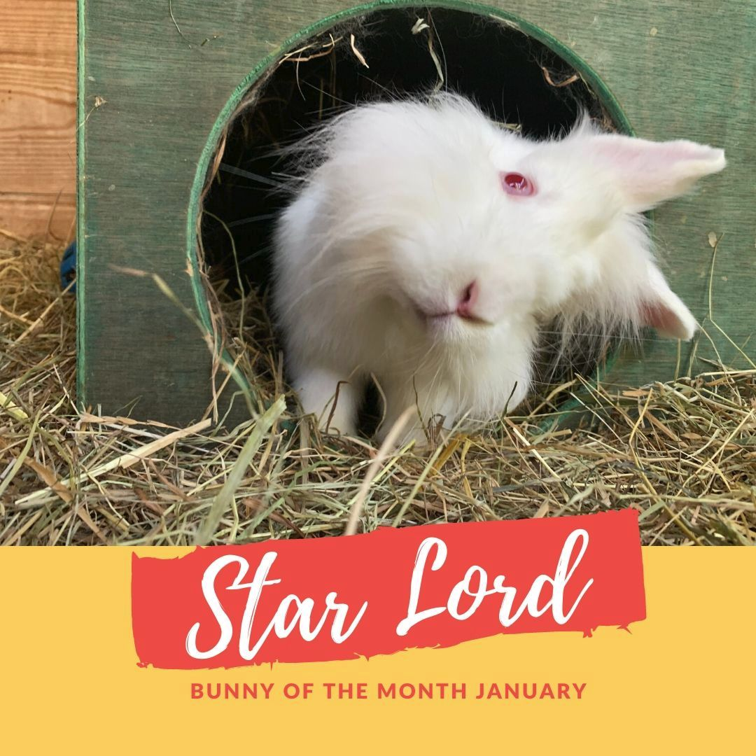 Star lord bunny of the month