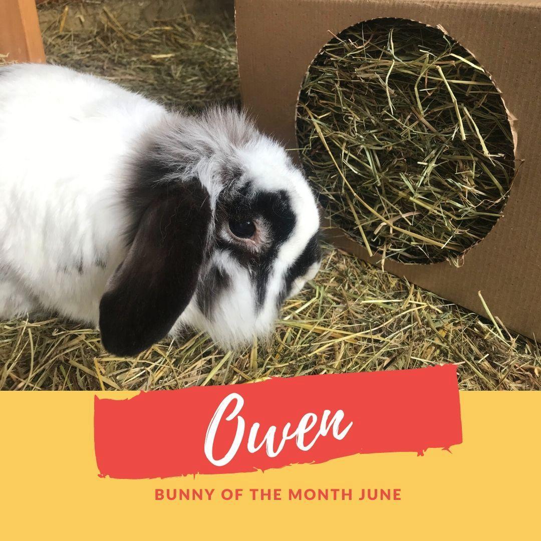Owen sanctuary bunny of the month