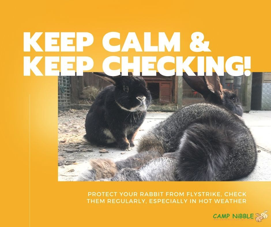 Keep Calm and Keep Checking