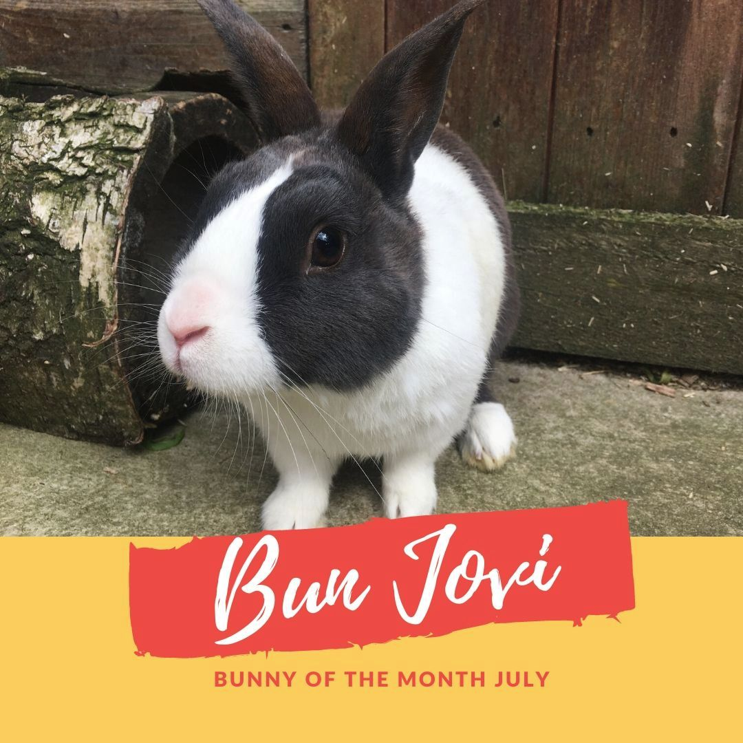 Bunny of the month Bun Jovi