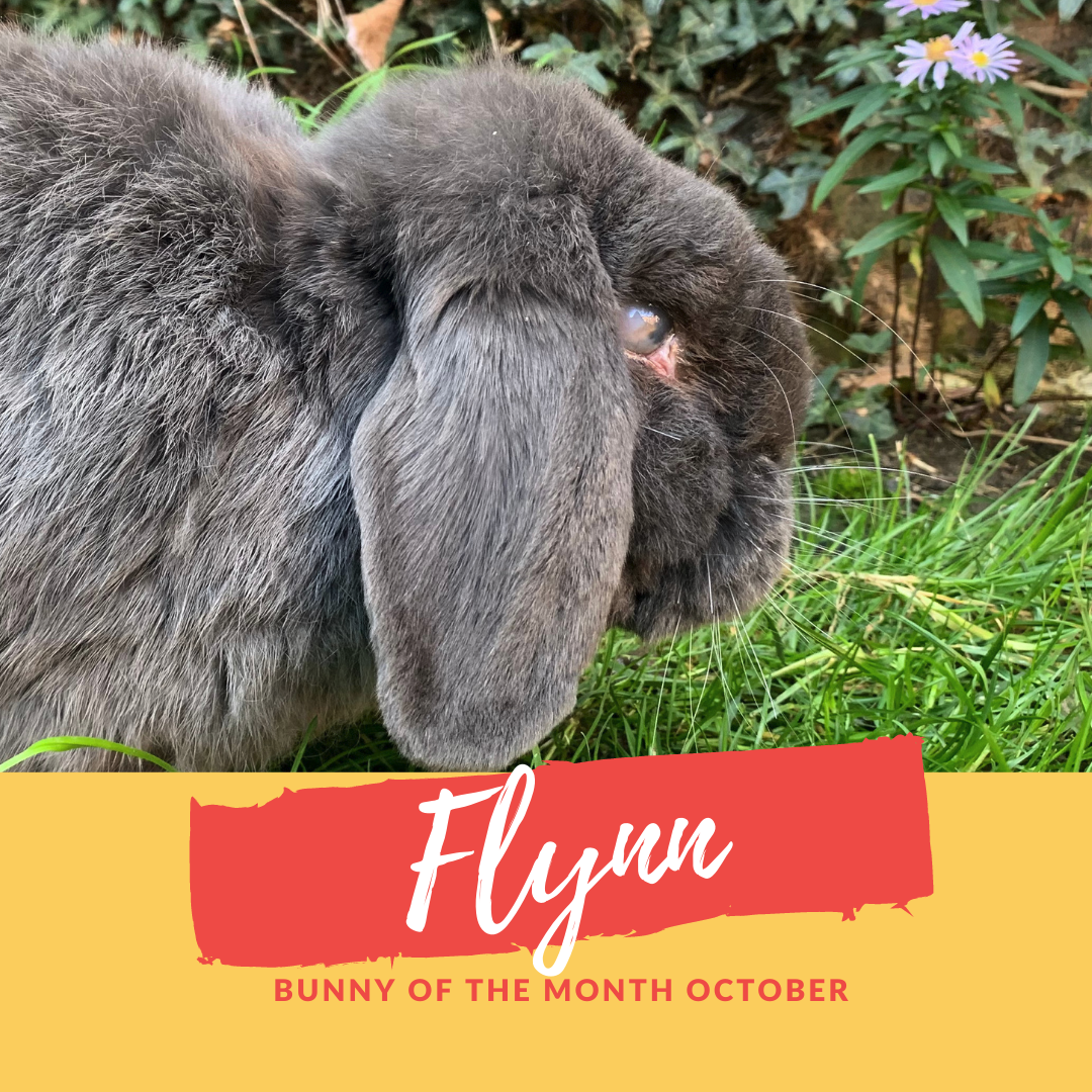 flynn bunny of the month October