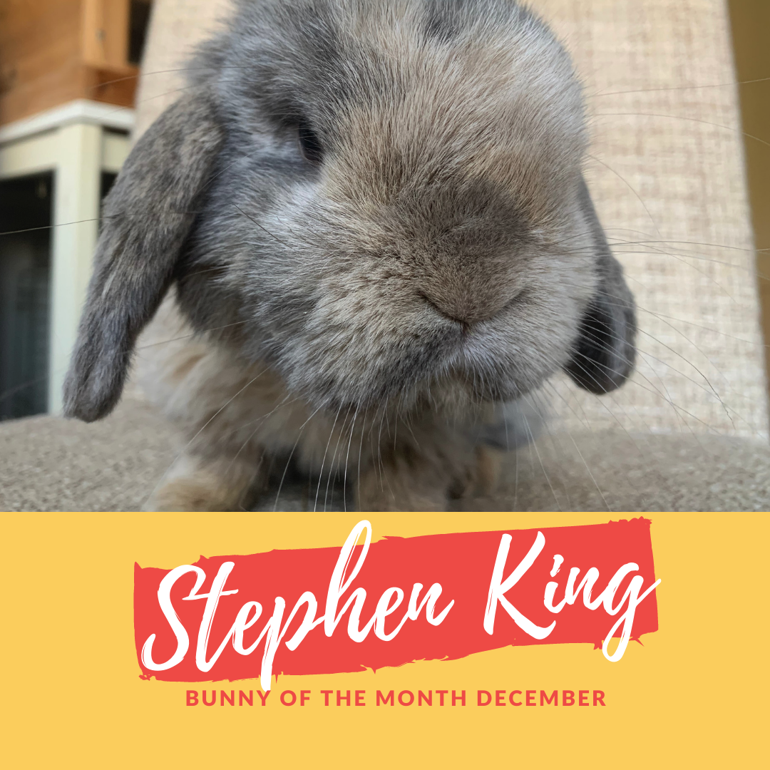 Stephen king bunny of the month