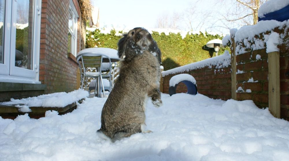Millie snow