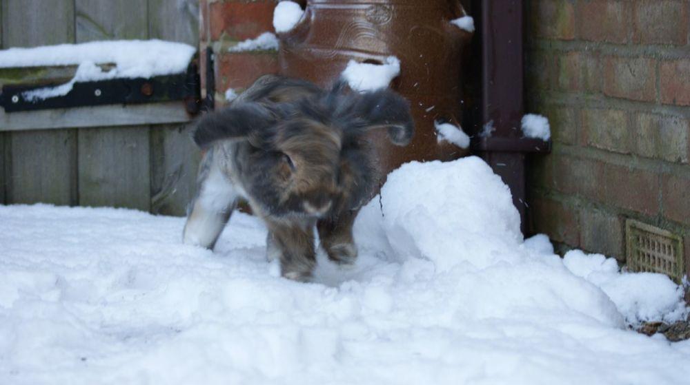 Millie snow Binkie