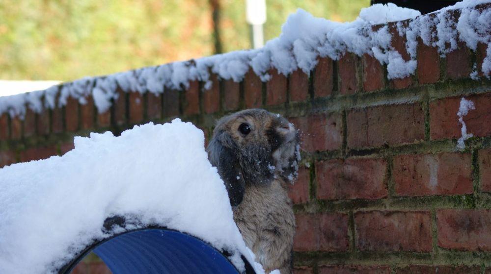 Millie snow 2