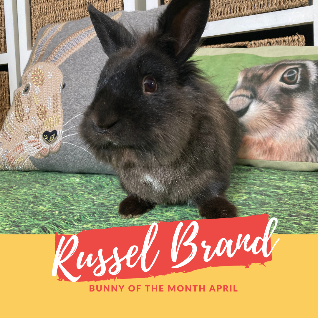 Russel brand bunny of the month