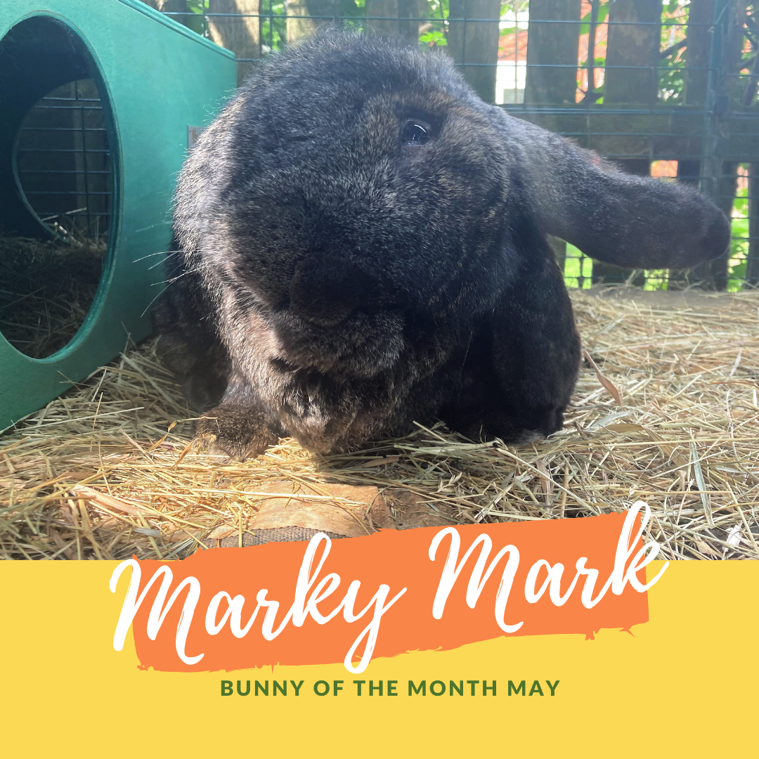 Marky Mark bunny of the month May