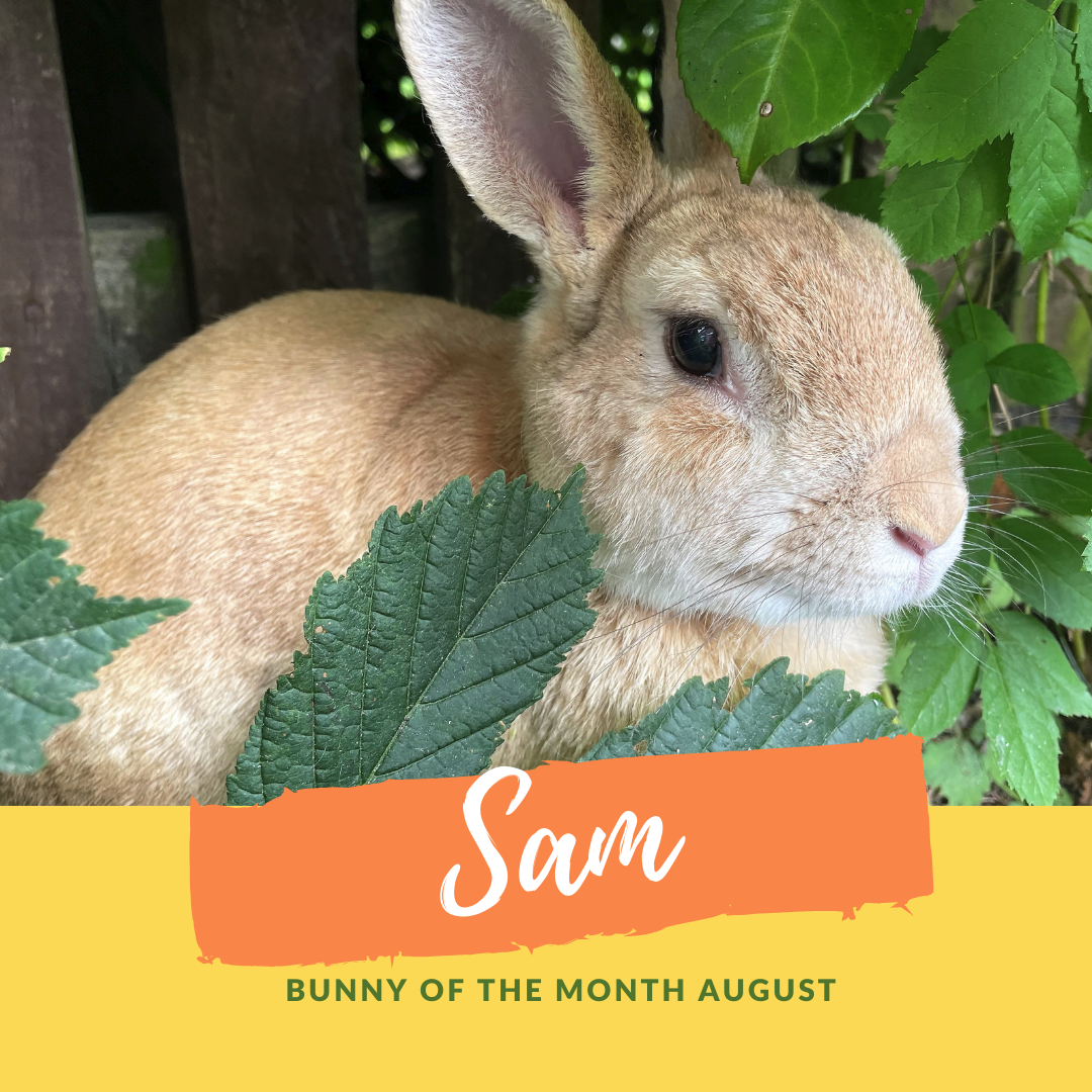 Sam bunny of the month