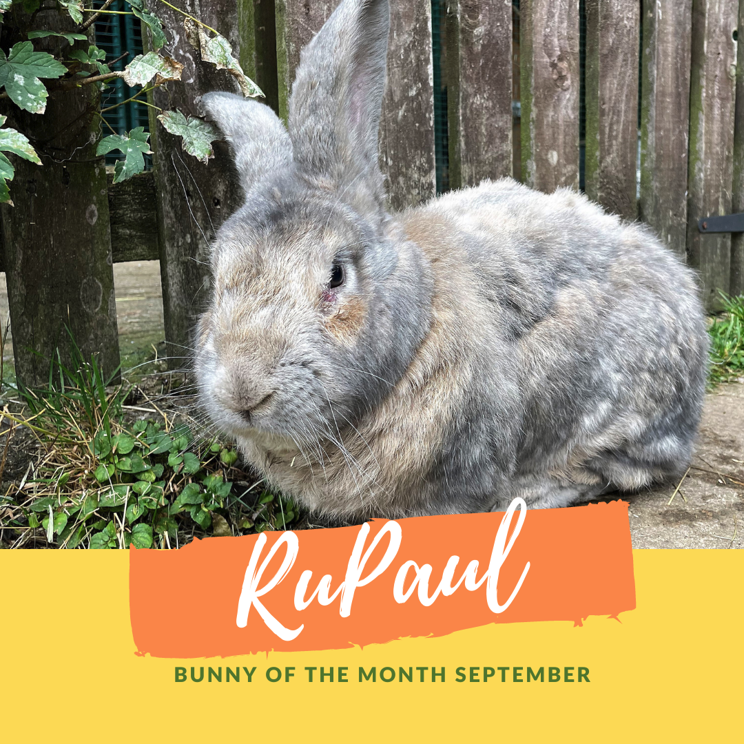 Rupaul bunny of the month