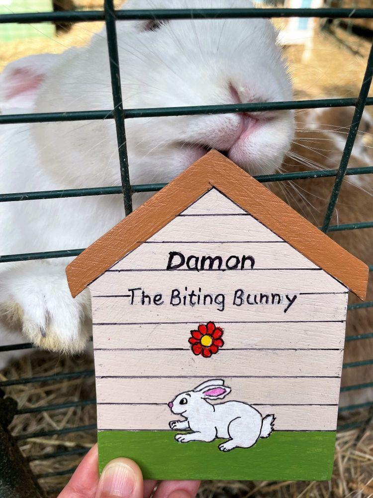 Damon sign