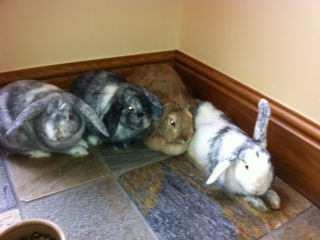 Toby,Pootle,Cloud,Tinkerbell