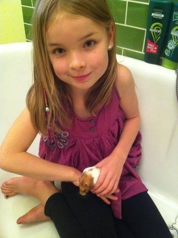 Ella and Honey hamster