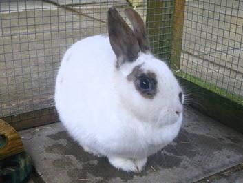 Sully rabbit_phixr