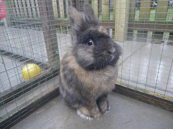 Wrinkles rabbit