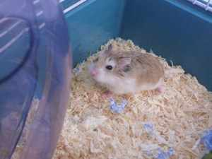 Kawaii hamster rehoming