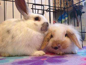 Sandras bunnies (2)