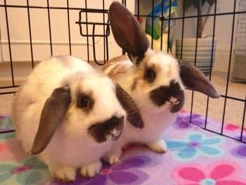 Sandras bunnies