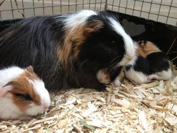 Leona and babies