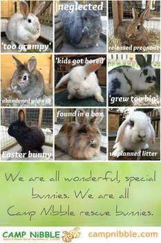 special bunnies