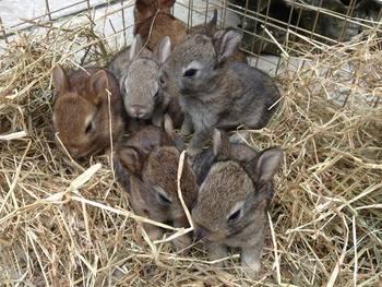 Pippas babies