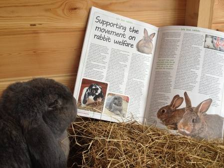 Wilf life with pets magazine