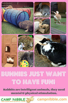 Bunnies want to have fun