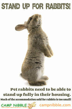 Stand up for rabbits