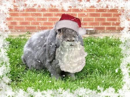 Wilf christmas snow