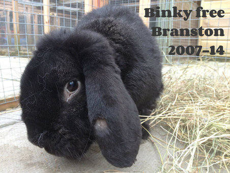 Binky free branston