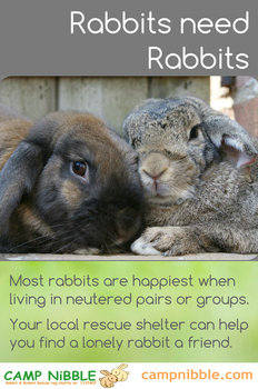 Rabbits need rabbits leaflet