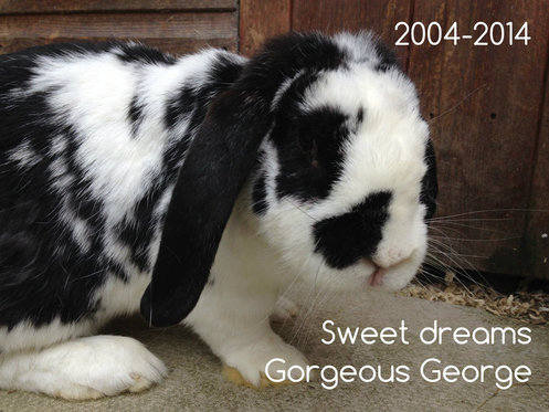 sweet dreams gorgeous george