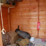 rabbit housing - playhouse and runaround (3)