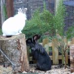 rabbit housing - piper and bigwig (3)