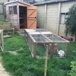 rabbit housing - shed tunnel run