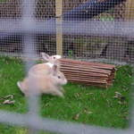 Rabbit housing - Ash and Linda (4)