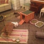 rabbit housing - indoor play pen (bertha and wendy)